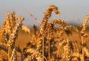 Európska komisia vydala usmernenie pre predaj poľnohospodárskej pôdy