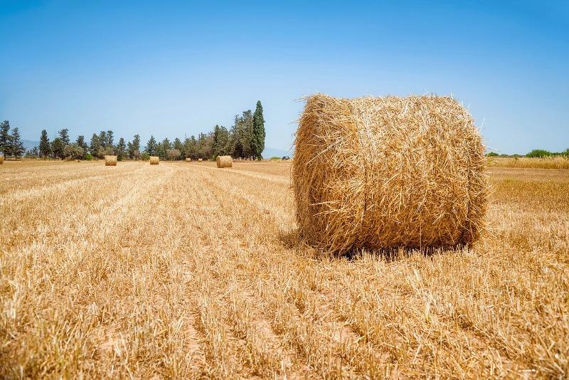 Pravidlá poľnohospodárskej politiky EÚ sa majú ešte viac zjednodušiť